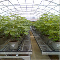 Gardening netting green house